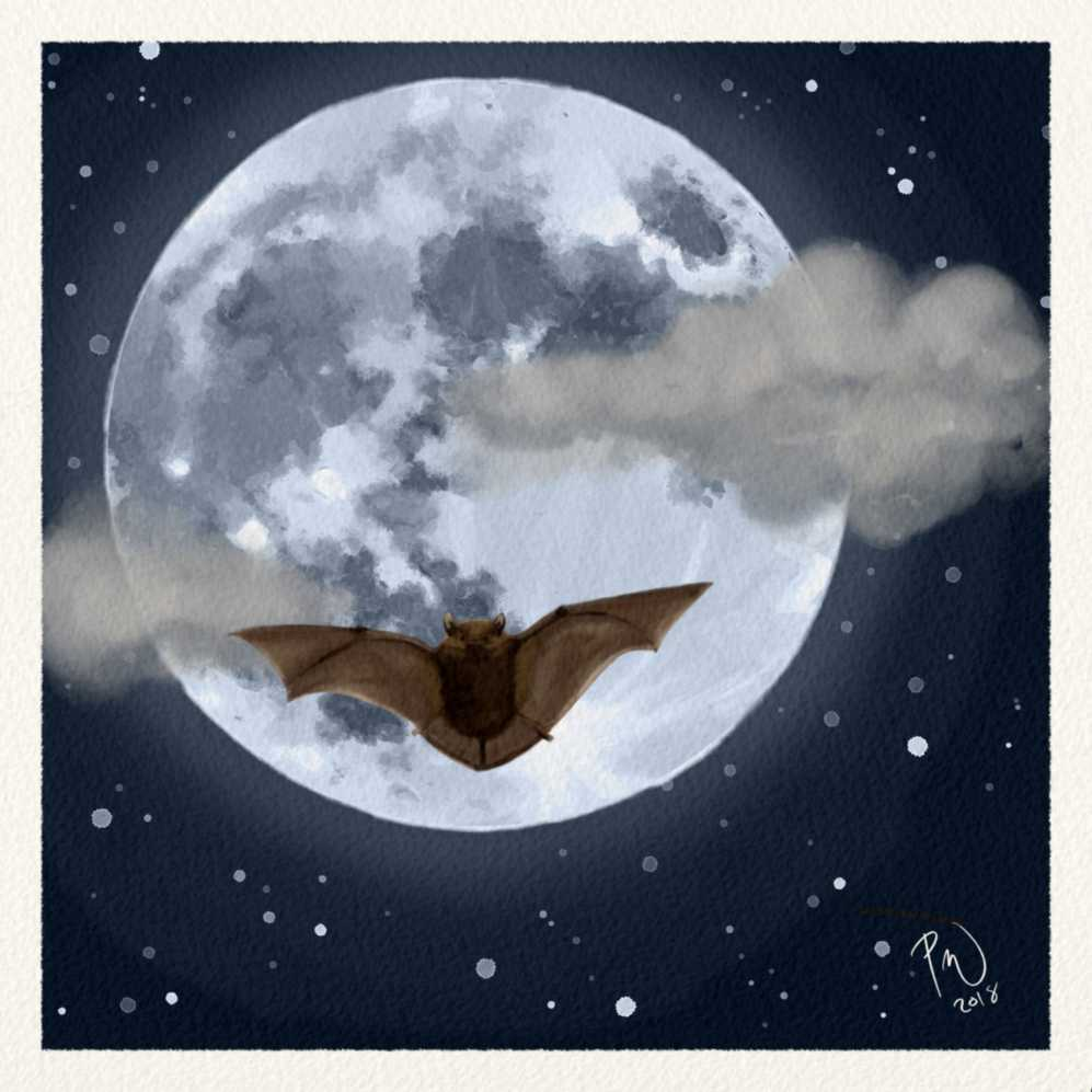 The moon. It is full, and bright, and a bat is flying in the night sky