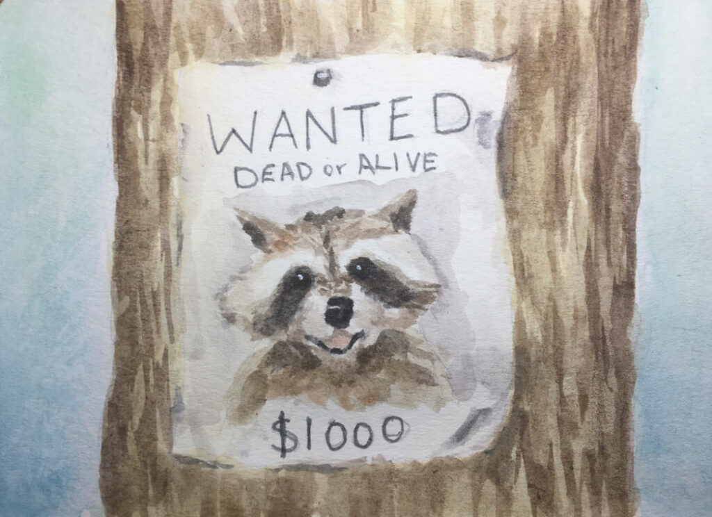 "a ""Wanted Dead or Alive"" poster advertizing a $1000 reward for a racoon"